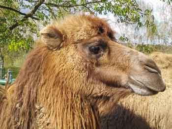 opel-zoo in kronberg - ausflugsziele für kinder in hessen